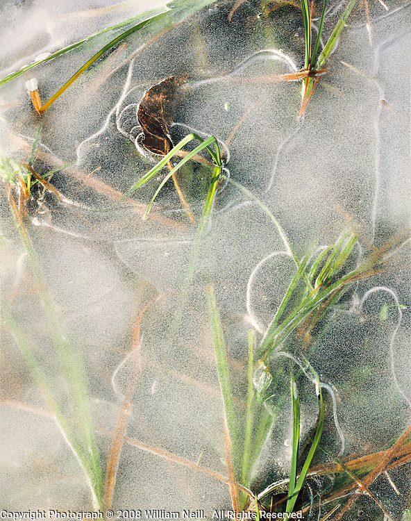 Ice and grass, Yosemite Valley, Yosemite National Park,  California