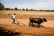 Boys prepare the field before planting.<br /> Gift Namapari (17) yellow shirt<br /> Forget Namapari (22) white shirt<br /> Chrispen Mudina (16) red shirt