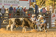 Bullfighters Nate Jestes (in the light shirt) and Cade Burns protect Chris Bechthold from Summit Pro Rodeo's 277 Jungle Ape SM during the Xtreme Bulls event at the Elizabeth Stampede on Friday, June 1, 2018. Bechthold scored 68 points on the ride, but was offered a reride, which he took.