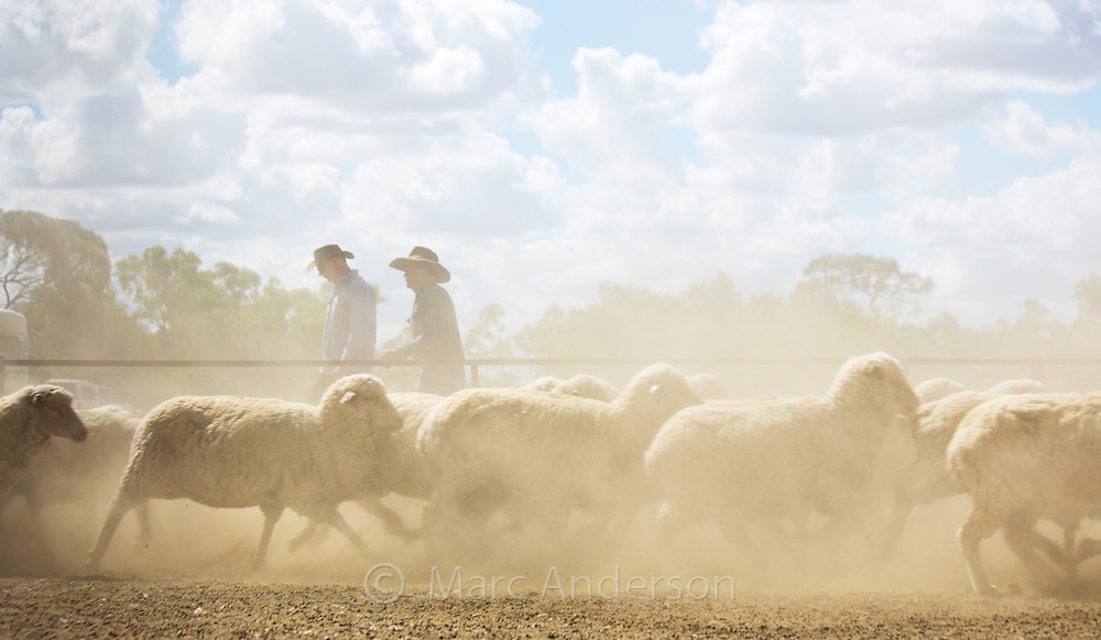 Herd of merino sheep on dry, dusty ground at a sheep station in western Queensland, Australia. Two farmers are in the background.