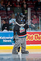 KELOWNA, CANADA - OCTOBER 31: Rocky Racoon, mascot of the Kelowna Rockets stands on the ice in his batman costume on October 31, 2015 at Prospera Place in Kelowna, British Columbia, Canada.  (Photo by Marissa Baecker/Shoot the Breeze)  *** Local Caption *** Rocky Racoon;