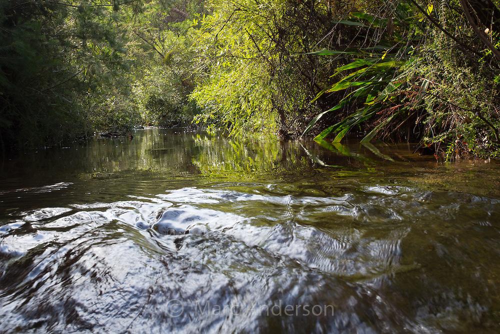 Kangaroo Creek near Karloo Pools in the Royal National Park, Australia