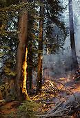 California: Sequoia, Prescribed Fire