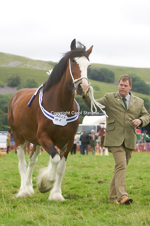 Craig Wilkins showing Stan &amp; Sue Brown's Bordley House Mamma Mia<br /> 2nd Barren Mare Class<br /> Winner SHS Silver Spoon (1st one for the mare)