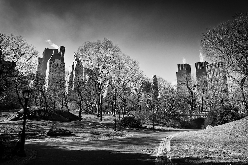 The winter skyline of Central Park in a rich black and White