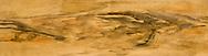 limba wood texture - a painted imitation of wood