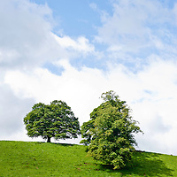Two trees on top of a green lawn hill