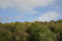 Landscape, County Kilkenny, Ireland