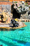Sea Lion Enclosure, Loro Parque aquarium and Theme Park, Costa Adeje, Tenerife, Canary Islands, Spain