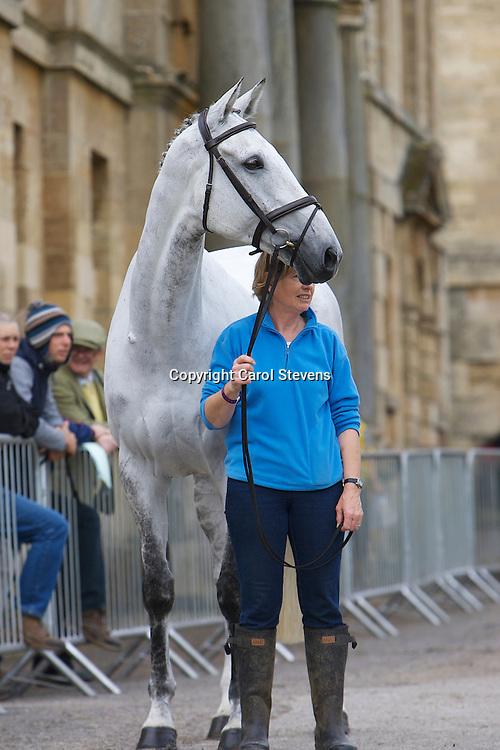 Equi-Trek Bramham International Horse Trials 2012<br /> Final Inspection  CCI3*<br /> Olivia Wilmot's Cool Dancer