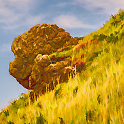 This is a natural rock sticking out from a hillside on the way down to the Giants Causeway in County Antrim, Northern Ireland. Yes, I took some liberties in making a more stylized version.  To me this rock looks like a Chinese lion's head. Can you see it?
