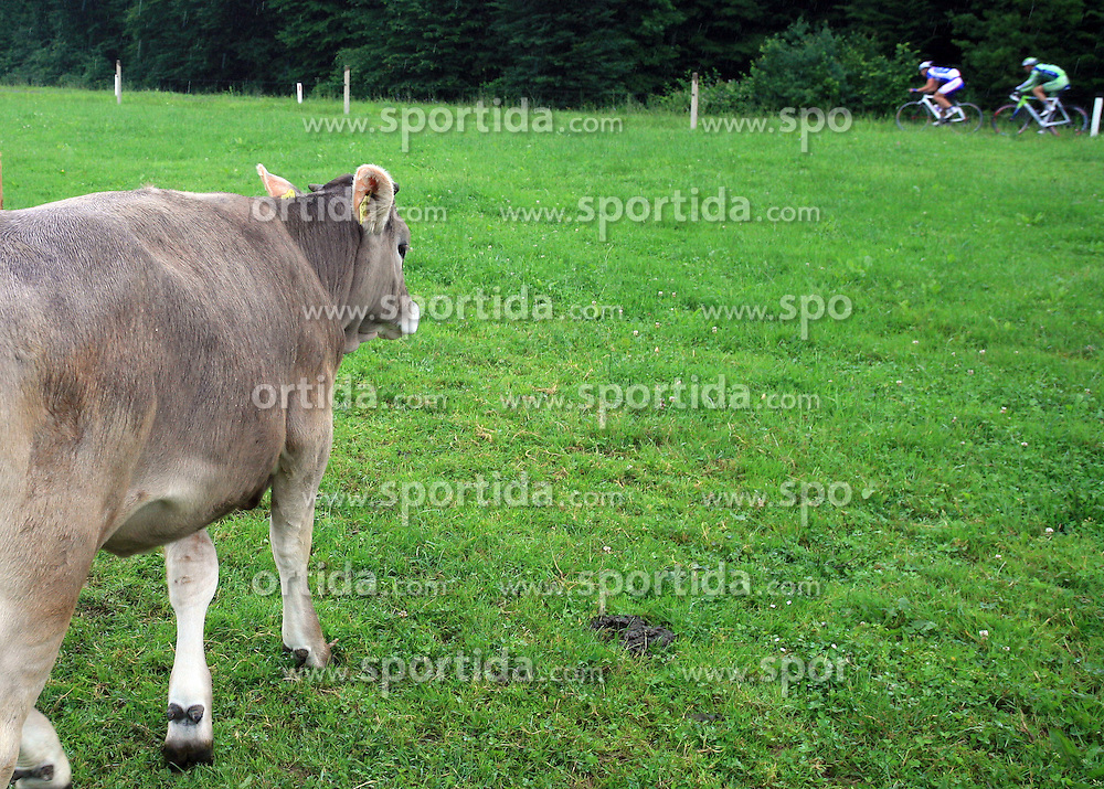 A cow looking the riders in last 4th stage of the 15th Tour de Slovenie from Celje to Novo mesto (157 km), on June 14,2008, Slovenia. (Photo by Vid Ponikvar / Sportal Images)/ Sportida)