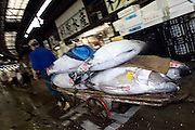 "An employee at the world's biggest fish Market in Tsukiji, Tokyo carries large tuna auctioned at the market. More than 2,300 tons of fish -- about one-third of the total consumed in Japan -- passes through Tsukiji each day and offers more than 450 varieties of marine products. The market, which dates back almost 75, will move to a high-tech site on a man-made island in Toyosu, which is well-documented as being contaminated with benizine. Not that Tsukiji is much better off -- many buildings in the aging site are stuffed with asbestos. ""Choose your poison,"" says one Tsukiji official. The new site, which the government plans to be readied by 2012, will be significantly larger, with more room for off-loading and for sellers to display their goods. The current location, says one official, is too cramped and collisions between motorised carts and pedestrians means accidents occur almost daily. Meanwhile, with fish sales down, it is becoming more difficult to justify Tsukiji's prime location and property developers are keeping a close watch on Tsukiji land, which is just a few blocks from the ritzy Ginza district of Tokyo, where per-meter land prices are the highest in the world..The move to the new Toyosu location, meanwhile, has been at the center of heated debate -- clean-up operations alone are estimated to cost ¥67 billion (around US$660 million), with a further ¥450 billion to build a new marketplace. Big wholesalers favour the move, but the 1,600-plus merchants mostly are against it. Yoshiharu Kiku, a Tsukiji storeowner who began working at the market 60 years ago, expresses bewilderment at the plans, saying that the name Tsukiji itself has become synonymous with the world's best and most eclectic selection of fish. ""This place has a long tradition. Why break it and start from scratch all over again?"" he says. """