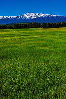 Green fields near La Peza, with snow capped Sierra Nevada Mountains behind, Granada Province, Andalusia, Spain.