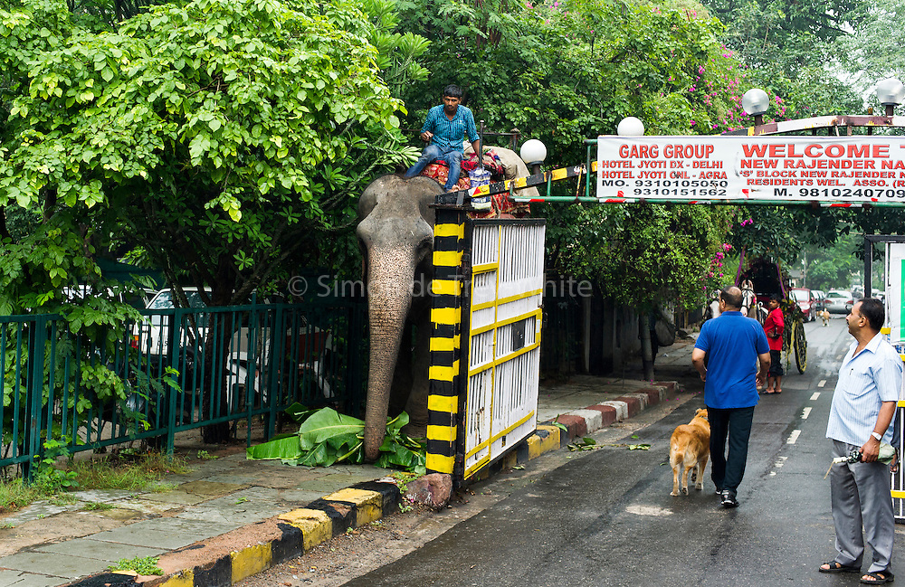 6th September 2014, New Delhi, India. An elephant ridden by a mahout squeezes past a gate to a colony in New Rajinder Nagar on its way to a wedding ceremony in New Delhi, India on the 6th September 2014<br />