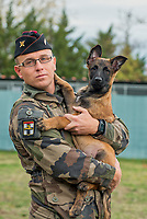 "Persee, a 2,5-month-old Malinois, has joined the ranks of the 68th African Artillery Regiment.<br /> He has already received his cap. (and goes with it, by the way)<br /> Integrating a  puppy into a regiment is an experiment. The military dog of the Army is usually bought between one and three years, that is to say as an adult. <br /> Integrated within the cynotechnic element of detection, he will have to train without delay with his dog master to acquire the patent of tracking ""initiation"" and the certificate of ""patrol"" on the date of his first birthday.<br /> The goal is to make him acquire the needs of his missions as soon as possible.<br /> Its future missions: defense and security of sensitive facilities, combat support, human research, but also search for explosives or narcotics. He will be able to perform them both in theaters of outdoor operation and in the context of Operation Sentinelle.<br /> This is the beginning of a long adventure for this ""soldier dog"" assigned to the 68th African Artillery Regiment .<br /> <br /> Persée, un malinois de 2,5 mois vient de rejoindre les rangs du 68e Régiment d'Artillerie d'Afrique. <br /> Il a déjà reçu son calot (et pars avec, du coup)<br /> Intégrer un chiot à un régiment est une expérimentation. <br /> Le chien militaire de l'armée de Terre est généralement acheté entre un et trois ans, c'est-à-dire à l'âge adulte. <br /> Intégré au sein de l'élément cynotechnique de détection, il devra sans tarder s'entrainer avec son maitre de chien pour acquérir le brevet de pistage « initiation » et le brevet de « patrouille » à la date de son premier anniversaire.<br /> L'objectif, étant de lui faire acquérir les besoins de ses missions le plus tôt possible.<br /> Ses futures missions : défense et sécurité des installations sensibles, appui au combat, recherche humaine, mais aussi recherche d'explosifs ou de produits stupéfiants. Il pourra les effectuer tant sur les théâtres d'opération extérieure que dans le cadre de l'opération Sentinelle.<br /> C'e"