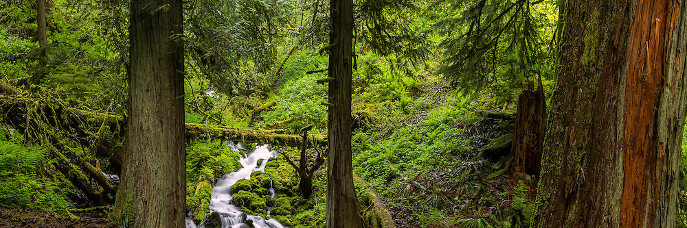 Hiking through the many trails of the Columbia River Gorge allows you to stumble upon many areas of silence and the feeling of being alone, surrounding by moss and trees and water.