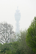 © Licensed to London News Pictures. 03/04/2014. London, UK. The BT Tower is almost completely shrouded.  Views of central London shrouded in fog this morning 3rd April 2014 from Regents Park. Photo credit : Stephen Simpson/LNP