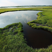 Open pool of water in the wetlands of Surf City NC, surrounded by marsh grass.