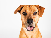 Adoptable Dogs - March 2017