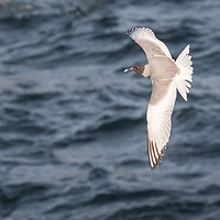 Shorebirds, part 2