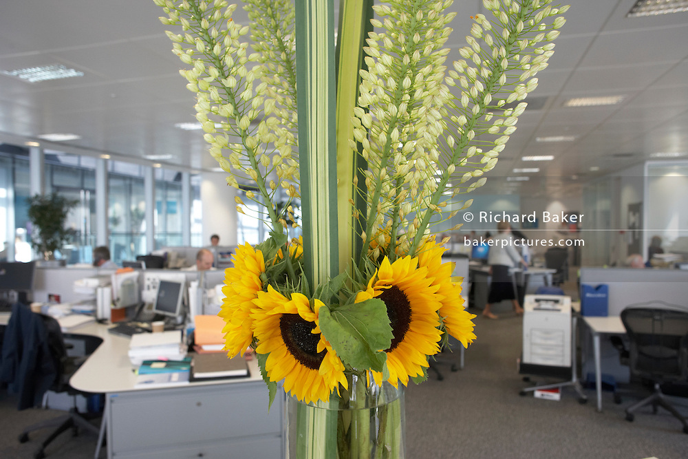 Yellow sunflowers brighten up drab offices of an auditing company at their London headquarters