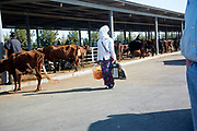 Ashgabat 2017 - Livestock Turkman woman with full face covering at livestock market near Ashgabat