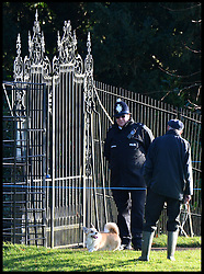 A corgi dog runs round the grounds of Queen's Sandringham Estate as HM The Queen attends a church service on the Sandringham estate in Norfolk, United Kingdom. Sunday, 22nd December 2013. The Royal Family will spend Christmas at Sandringham. Picture by Andrew Parsons / i-Images
