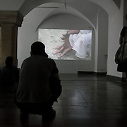 Video work by Emily McMehen. OUT of STH Vol.3 at Awangarda Gallery. Two shows at once, Les Fleurs du Mal - New Art from London curated by Cedar Lewisohn and Free Ride Art Space / bicycle exhibition curated by Blandine Roselle. The shows run 30 April - 17 June.
