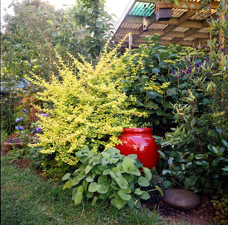 detail of garden with red pot and yellow foliage