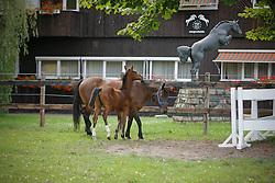 Clone of Ratina Z (1)<br /> Studbook Zangersheide - Lanaken 2009<br /> © Hippo Foto - Dirk Caremans