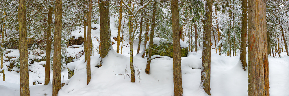 A fresh blanket of snow covers the forest floor in Michigan's Upper Peninsula