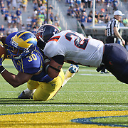 Delaware Running Back Andrew Pierce (30) attempts to dive into the end zone during a Week 3 NCAA football game against Bucknell University...#13 Delaware defeated The Bison of Bucknell 19 - 3 at Delaware Stadium Saturday Sept. 15, 2012 in Newark Delaware.