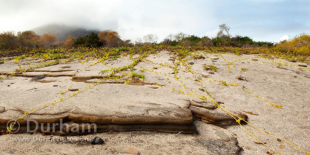 Interesting rock erosion along the shore of James Bay, Santiago Island, Galapagos Archipelago - Ecuador.