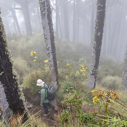 A hiker walks along the trail to the Summit of Santa María Volcano.