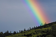 Rainbow, Whiskeytown National Recreation Area, Shasta - Trinity National Forest, Shasta County, California