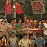 CHIANG MAI - MARCH 5 2006 : The matches are held in all manner of buildings, from shanty shacks to upscale arenas. In the larger arenas, the winning purses can be $10,000 US or more, with bets raising the stakes even higher. Here an overflow crowd watches a match from stadium seating.  Bird Flu caused the banning of cock fights in 2005, but a persistent movement of Thai's claiming the social significance of the sport and a reduction in Bird Flu cases has allowed the fights to resume. (Photo by Logan Mock-Bunting)