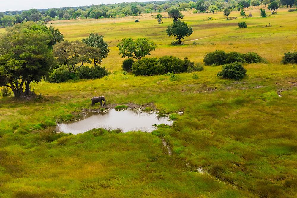 Aerial view of an African elephant at a watering hole, Okavango Delta, Botswana.