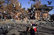 Mongolia. Ulaanbaatar. Gandan Monastery OulanBator    / Monastère Bouddhiste de Gandan à Oulan Bator.   / 39    L921006a  /  P0002775