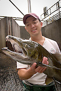 Portland General Electric fish biologist Tim Shibahara holds a wild coho salmon (Oncorhynchus kisutch) in the Faraday Dam fish trap.