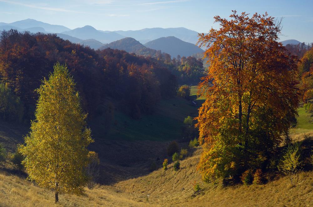 Pastures and forest hills, National Park Piatra Craiului, Transylvania, Southern Carpathians, Romania