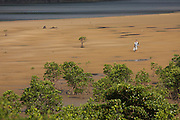 Iriomote-jima. Mangrove forests along the mouth of Urauchi-gawa (river). Men fishing and looking for seafood during low tide.