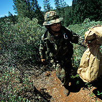 "The national forests in California and across the nation are increasingly being used to grow marijuana. The clandestine grows are shielded by tree canopies and are often close to, if not actually inside, recreational usage areas so that the growers can appear to be normal recreational users. A task force comprised of Sheriff deputies, US Forest Service Agents and Dept. of Justice agents raided a grow in the Tahoe National Forest that yielded 5000 plants in the 2""-12"" range and arrested one Mexican national who was tending the grow."