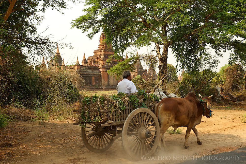 A man on a ox-cart on his way back from the field passes in front of one of the old temples of Bagan.