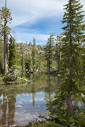 """Paradise Lake 2"" - Photograph of pine trees along the shore of Paradise Lake in the Tahoe National Forest."