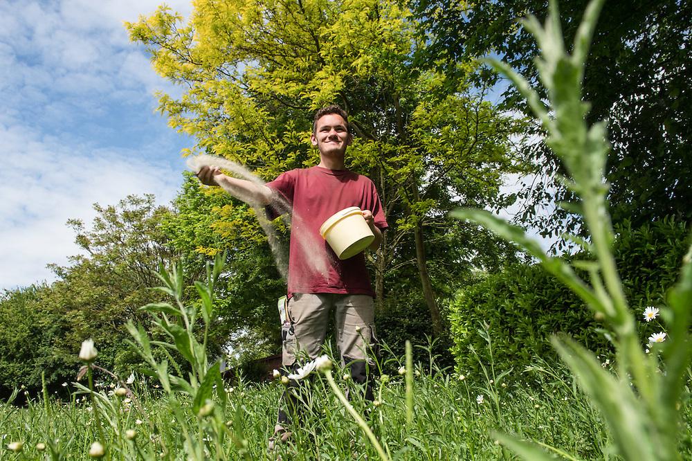 LE VIF VERT- FERME DES PILIFS Neder-over-Hembeek - espaces favorisant la biodiversité: BANDE DE PRE FLEURI