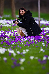 Taiwanese flight attendant Nido Hsu, 27 takes in the crocuses whilst on a layover as crowds enjoy the unseasonably warm and sunny weather in Regents Park, London. London, February 26 2019.