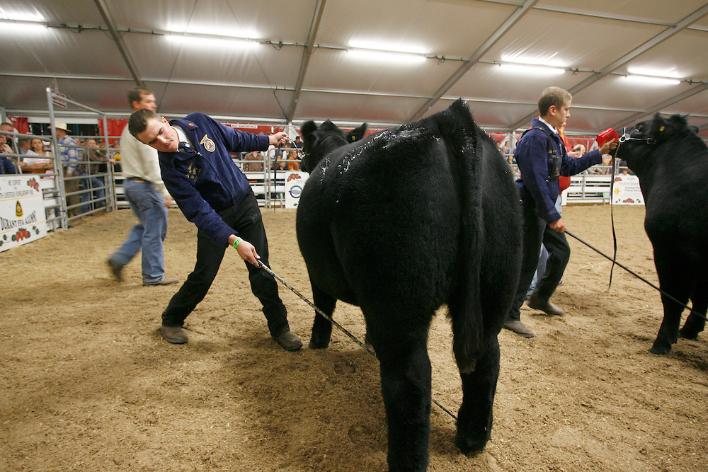 OT_302749_ALLE_Steers_01 1 of 3.WILLIE J. ALLEN JR. | Times.(03/04/09 Plant City)  Darren Turner (cq) Plant City high school student shows his steer the eventual Grand Champion of the Youth Steer Show competition on Wednesday evening at the Strawberry Festival in Plant City.  Turner of veteran of the competition was later seen jumping up and clicking his heels in elation.