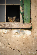 Framed - a feral cat in an abandoned house