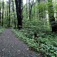 Trail through Great Barrington, Massachusetts